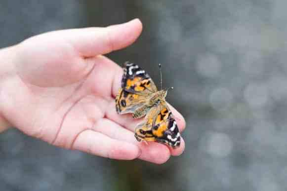 Schmetterlinge Schmetterlingsgarten-15