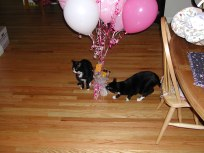 Exploring baby shower balloons