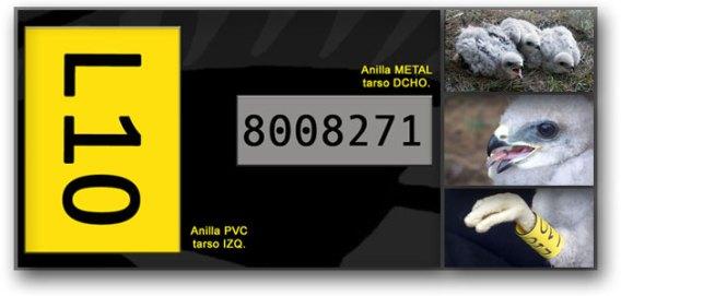 Portada Campaña Marcaje con PVC