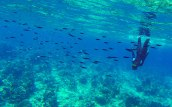 Free diving among the schooling fish