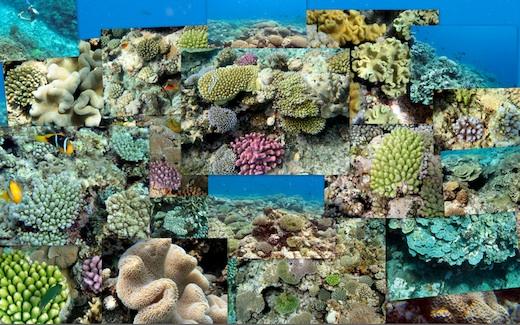 Coral Garden Collage of photos