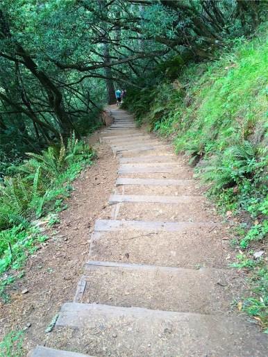Steep steps on Ocean View Trail