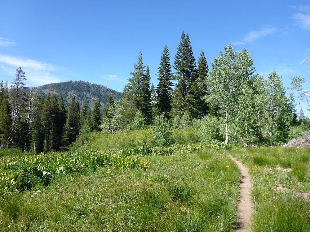 22-Tahoe Rim Trail
