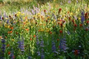 62-Wildflower Bouquet