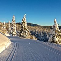 XC Skiing Explained (Part 1): Introduction to Classic Cross-Country Skis