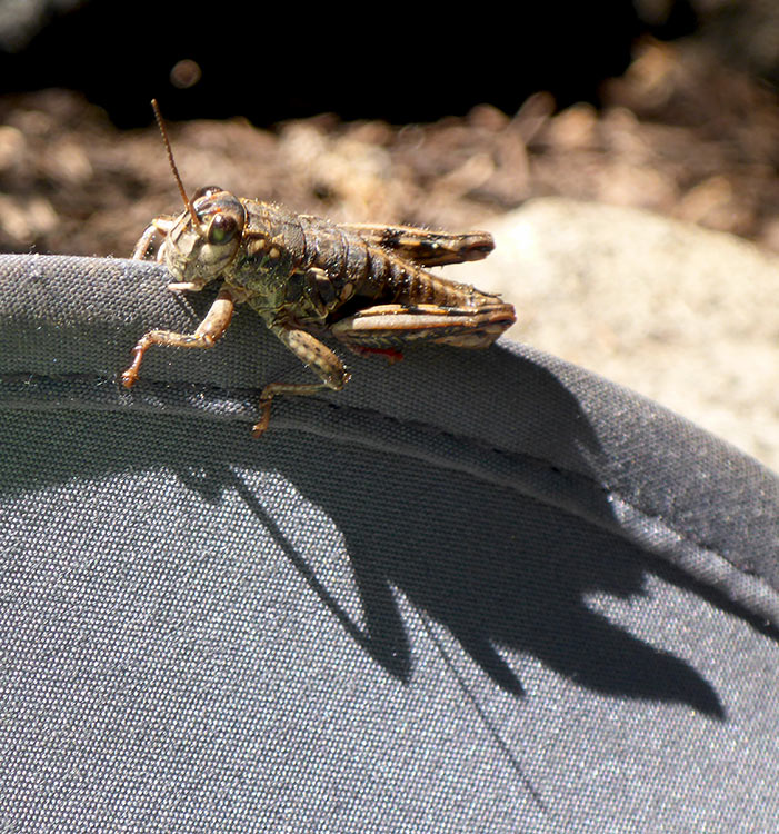 21 - Grasshopper Chewing on the Brim of My Hat