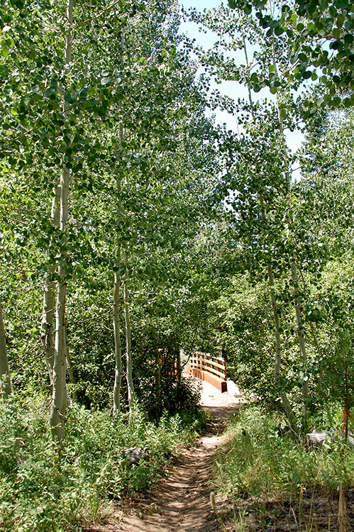 66 - Aspen Trees and a Bridge Across Grass Lake Creek