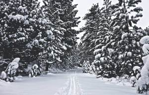 Snow-flocked trees and cross-country ski tracks near Hope Valley