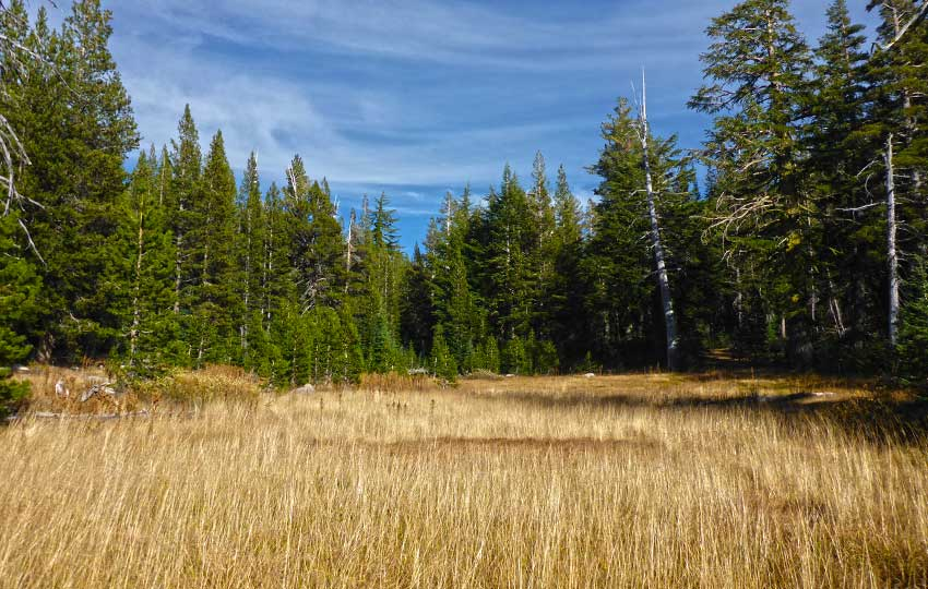 Meadow along the Tahoe Rim Trail, near Echo Summit