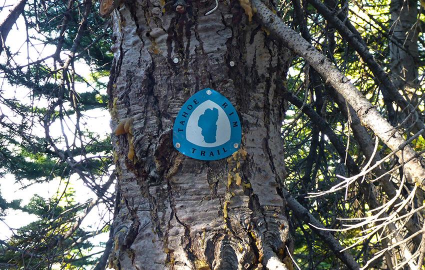 Tahoe Rim Trail marker on a Fir Tree