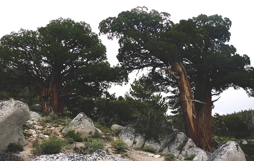 Juniper trees and hiking trail on a cloudy day