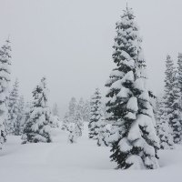 Cross-Country Skiing on the South Shore of Lake Tahoe