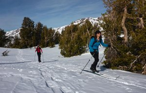 Cross-country skiers traveling along the Pacific Crest Trail past trees