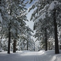 FAQs about Waxing Your Waxless Cross-Country Skis