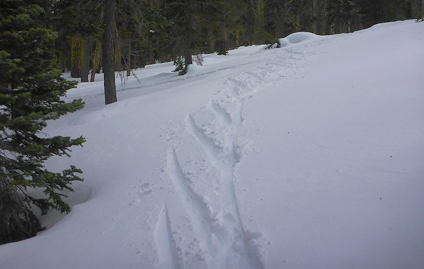 Half-herringbone pattern made by a cross-country skier hiking uphill