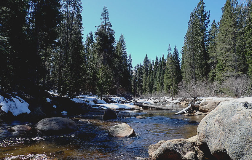 Mountain river flanked by trees and snow