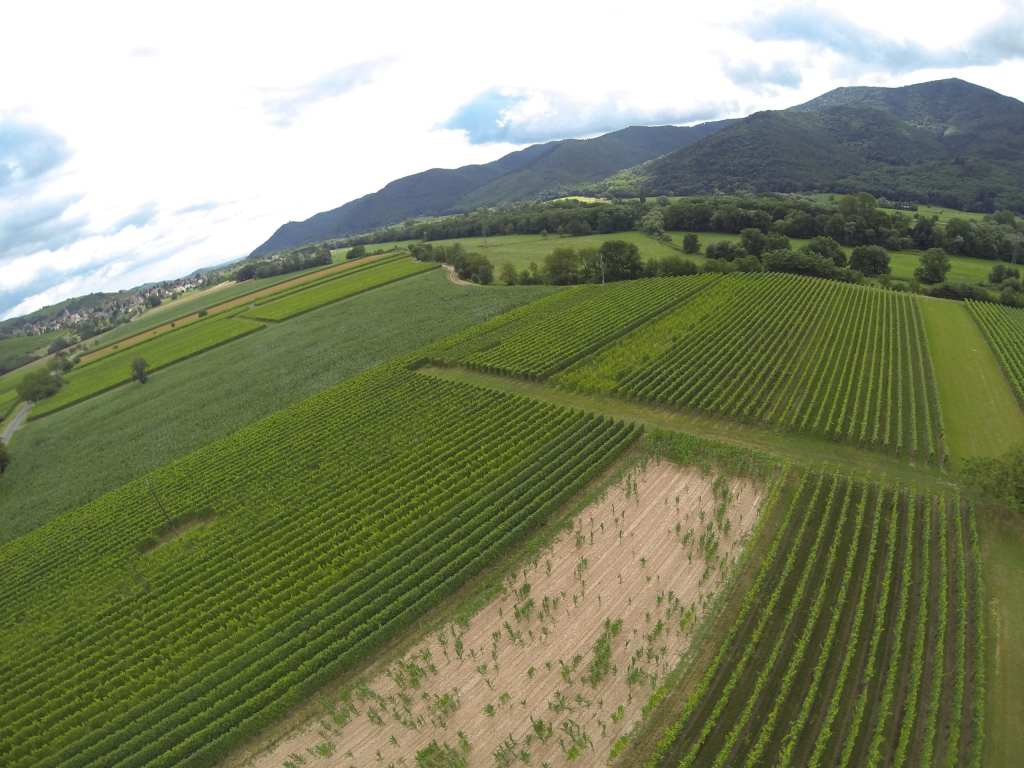 GGrape fields, Whir-au-val