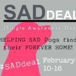 #SADDEAL {Single Awareness Day} Plus Contest