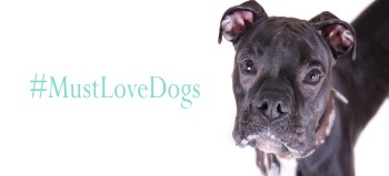 Must Love Dogs Tail-Waggers | Photography by Gotcha Photo Studio