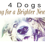 4 Dogs Hoping for a Brighter New Year!