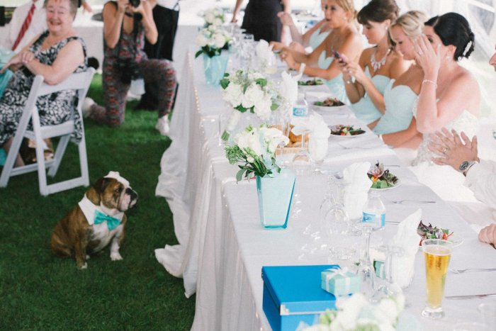 Dogs in weddings, weddings Toronto, Dog wedding attendant services, Tail-Waggers and weddings, bride, groom, bulldog, cute dogs in weddings, wedding paws,