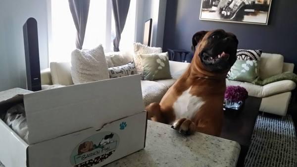 Mylo's big smile with his The Bark'N Fun Company