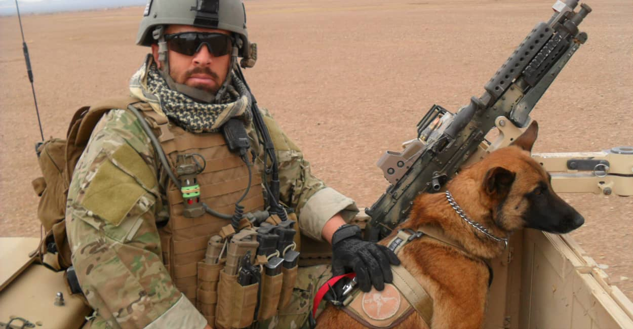 40 Pictures Of Military Service Dogs