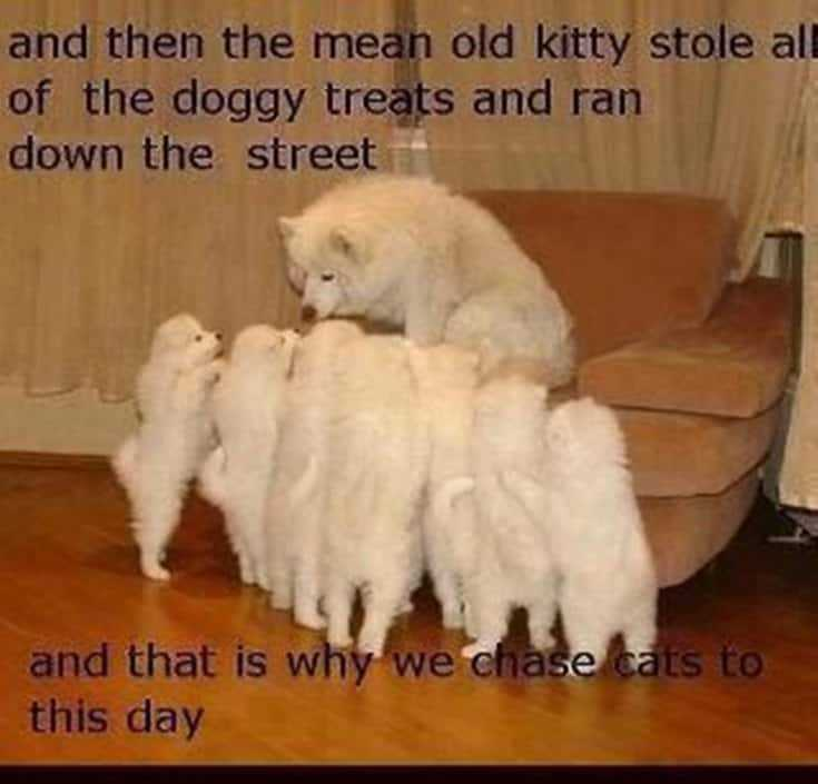35 Cool funny animal memes funny animals pictures 33