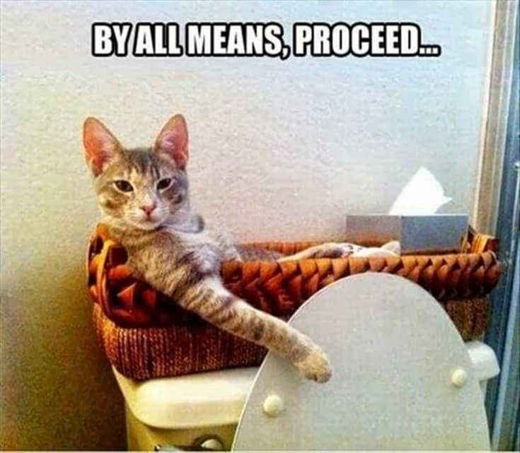 35 Cool funny animal memes funny animals pictures 9