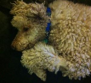 Sleeping Muppet