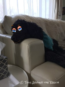 The cross black dogs must bear