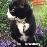 Cat Friendly Garden at Home