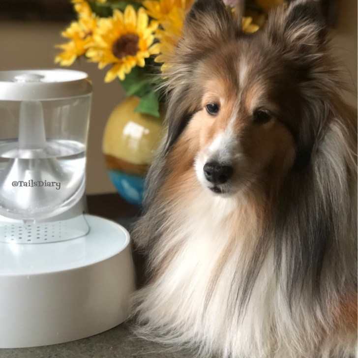 What Causes Pet Dehydration