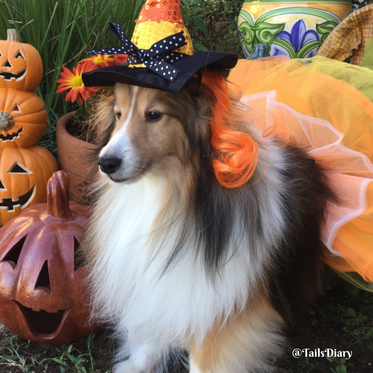 Pet Halloween Costumes Guide for Dogs and Cats