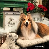 Sheltie Lovers Must-Haves