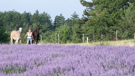 Lavender Photo Shoot