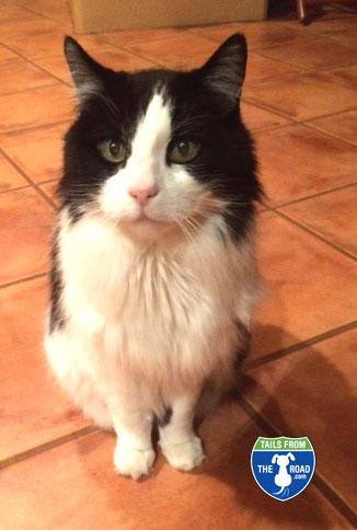 Ripley is 15!  Looking Good!