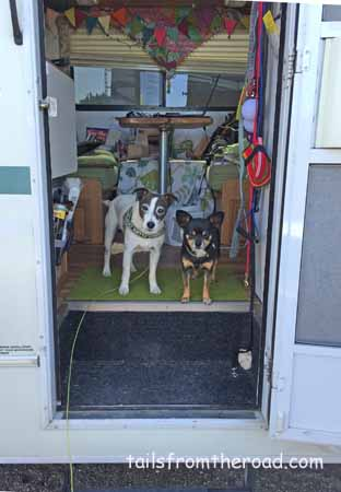 Mick and Romeo waiting at the motorhome door.