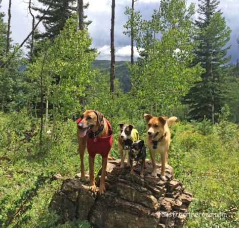 Zula, Mick, Romeo & Cali on a rock in Colorado