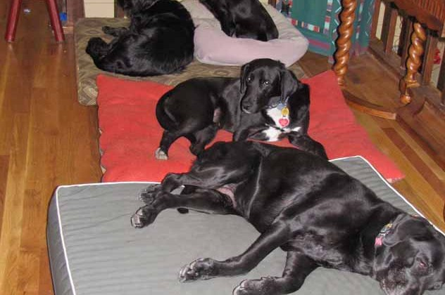 Got Dogs? Got Problems? Solutions for Multi-Dog Households