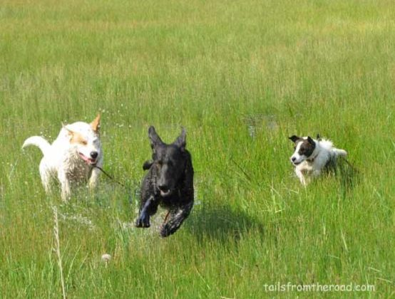 Zoomies! Who let the dogs out!