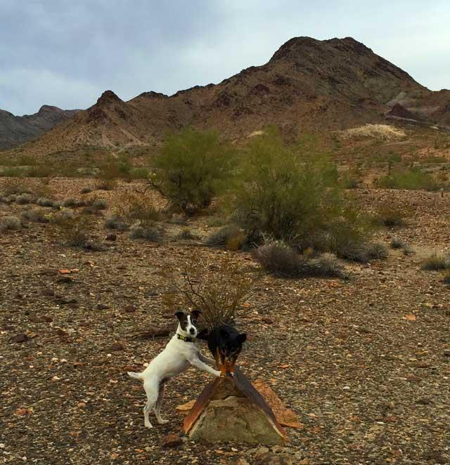 Mick & Romeo in balance in Quartzsite, AZ