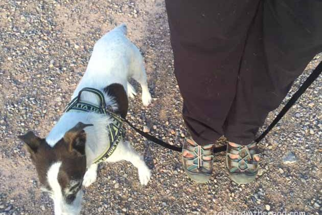 Best Solutions for Jumping Dogs