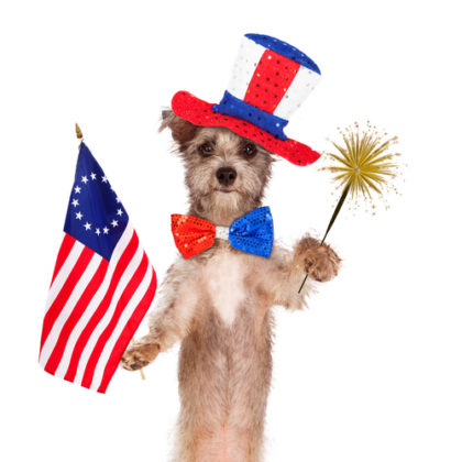 Some dogs are candidates for 4th of July parades, but not fireworks!