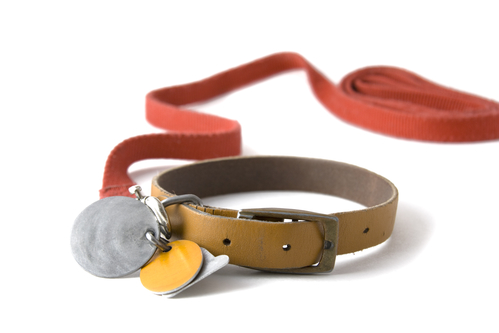 Collar with tags & leash, so important!
