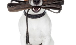 The Perfect Dog Leash