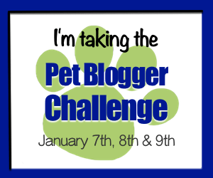 pet-blogger-challenge-2017