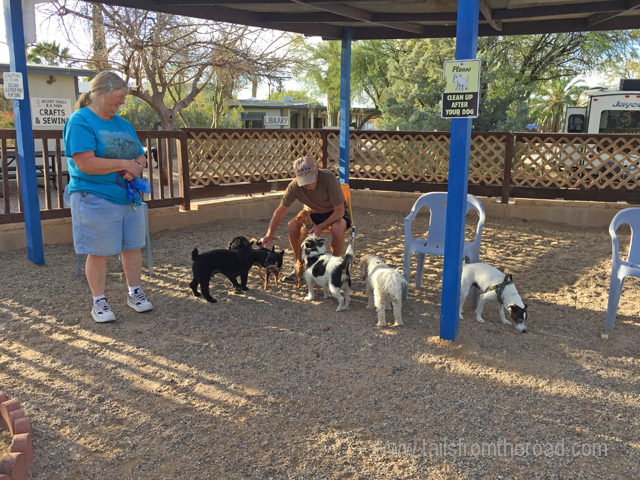 Dog Park at Desert Trails RV park, Great for some dogs, not so much for others.