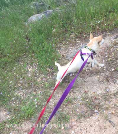 Rudi being totally wild on the leash, seeing birds in the wild.