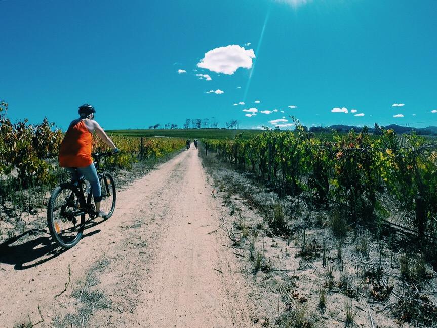Bikes n Wines Cycling in the Winelands Stellenbosch